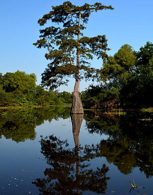 Bayou Reflections Art Print