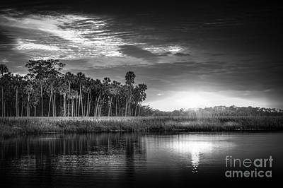 Saw Palmetto Photograph - Bayou Sunset-b/w by Marvin Spates
