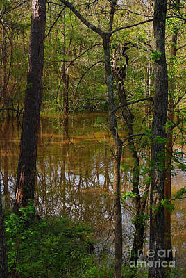 Photograph - Bayou With Snake by Connie Fox