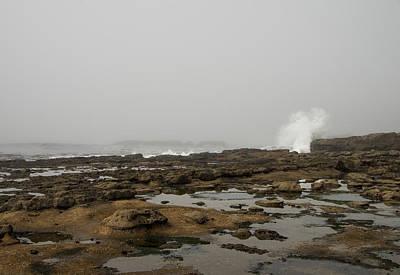 Photograph - Botanical Beach Shoreline by Marilyn Wilson