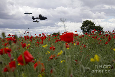 Poppies Field Digital Art - Bbmf Poppy Field  by J Biggadike