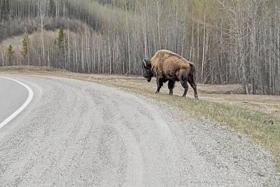 Photograph - Lone Bison by Dyle   Warren