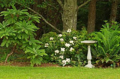 Photograph - Backyard Garden by Marilyn Wilson