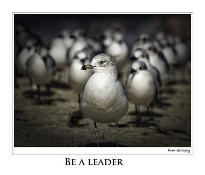 Photograph - Be A Leader Poster by Fran Gallogly