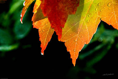 Oregon Photograph - Be Grateful For Autumn's Sun by Mick Anderson