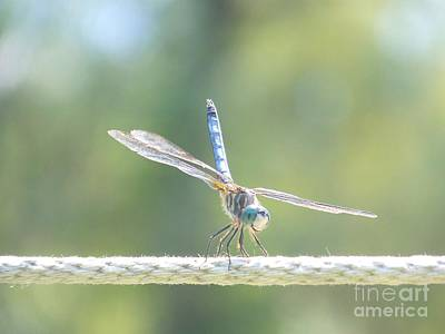 Photograph - Smiling Dragonfly by Eunice Miller