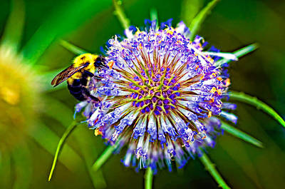 Weed Digital Art - Be My Honey by Steve Harrington