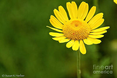 Photograph - Be My Sunshine by Susan Herber