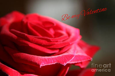 Photograph - Be My Valentine  by Lynn England