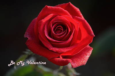 Photograph - Be My Valentine Rose by Ronald T Williams