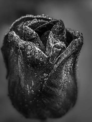 Photograph - Be Still - Tulip by Rae Ann  M Garrett