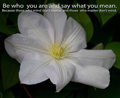 Photograph - Be Who You Are by Sandra Clark