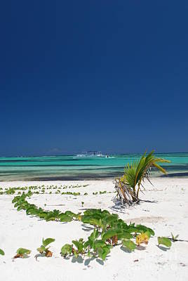 Beach And Vegetation Playa Blanca Punta Cana Resort Art Print
