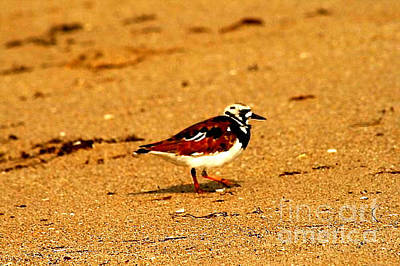 Photograph - Beach Bird 1 by Anita Lewis