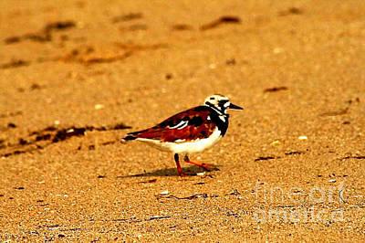 Photograph - Beach Bird 1 by Anita Lewis