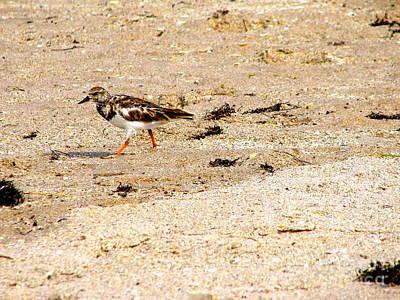 Photograph - Beach Bird 2 by Anita Lewis