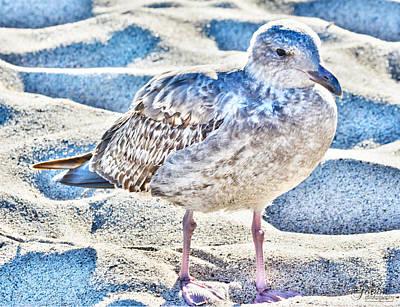 Photograph - Beach Bird by Jody Lane