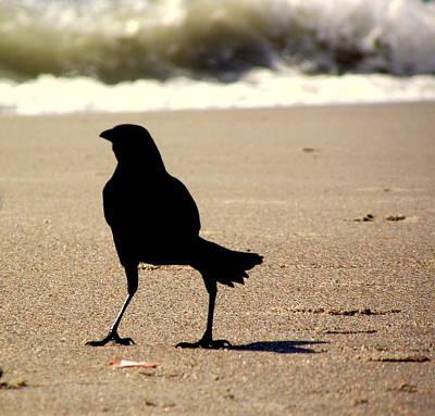 Rebecca West Photograph - Beach Bird  by Rebecca West