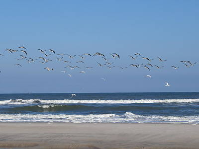Photograph - Beach Birds In Flight by Ellen Meakin