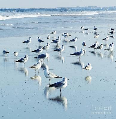 Photograph - Beach Birds Reflections by D Hackett