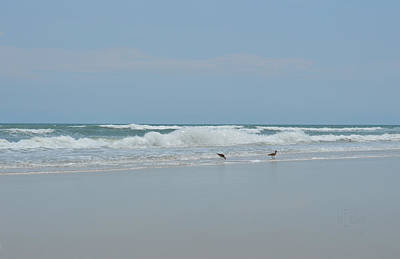 Pop Art Rights Managed Images - Beach Birds - Willets Royalty-Free Image by rd Erickson