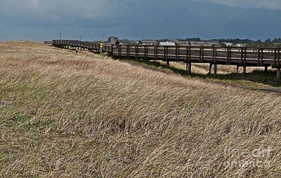 Photograph - Beach Boardwalk Along Dune Grass Art Prints by Valerie Garner