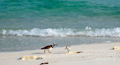 Florida Photograph - Beach Buddies by Megan Cohen