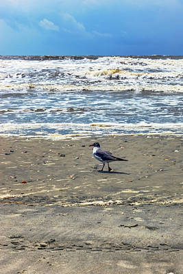Photograph - Beach Bum by Sennie Pierson