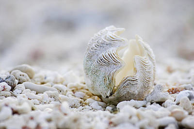 On The Beach Photograph - Beach Clam by Sean Davey