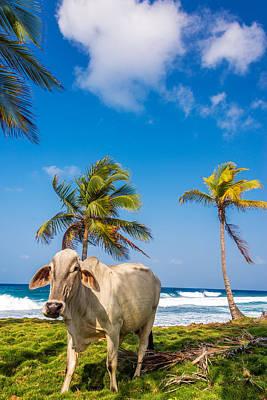 Beach Cow Art Print by Jess Kraft