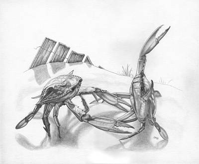 Blue Crab Drawing - Beach Crab Fight by Jonathan W Brown