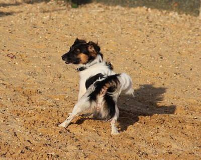 Beach Dog Pose Art Print