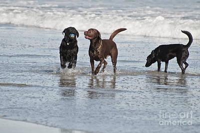Beach Dogs Original by Ruth H Curtis