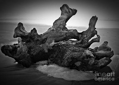 Photograph - Beach Driftwood Bw by Chalet Roome-Rigdon