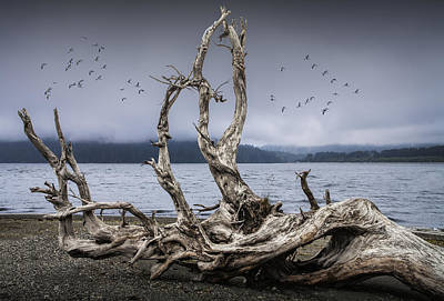 Driftwood Beach Fog Wall Art - Photograph - Beach Driftwood Sculpture On Vancouver Island by Randall Nyhof