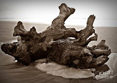 Photograph - Beach Driftwood Sepia by Chalet Roome-Rigdon
