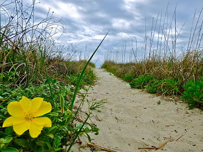 Photograph - Beach Evening Primrose by Jean Wright