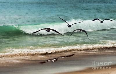 San Clemente State Beach Photograph - Beach Flight by Peggy Hughes