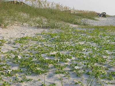 Photograph - Beach Flower Vines by Ellen Meakin
