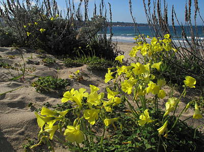Photograph - Beach Flowers by Derek Dean