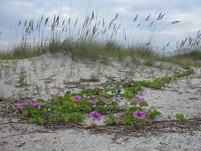 - Beach Flowers by Ellen Meakin
