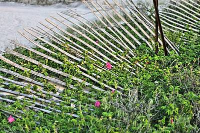 Photograph - Beach Flowers by JC Findley