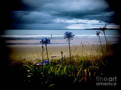 Photograph - Beach Flowers by Karen Lewis