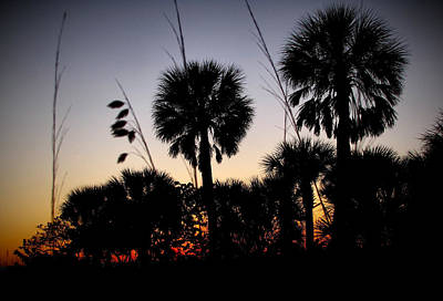 Beach Foliage At Sunset Print by Phil Penne