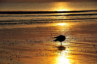 Photograph - Beach Gold by Joanne Brown