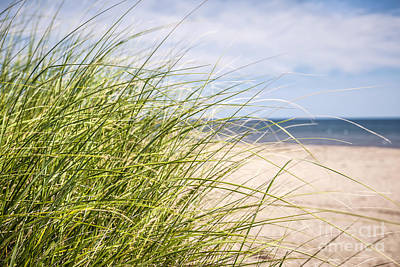 Photograph - Beach Grass by Elena Elisseeva