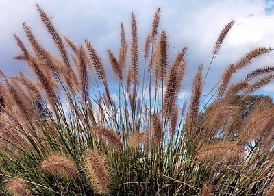 Photograph - Beach Grass by Janice Drew