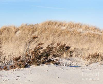 Ocean Photograph - Beach Grass by Michelle Wiarda-Constantine