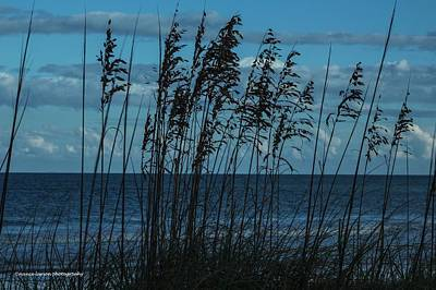 Photograph - Beach Grass by Nance Larson