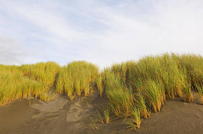 Beach Grass On Sand, Pistol River State Art Print by Panoramic Images